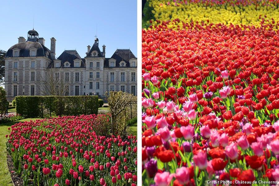 ruban de tulipes Château de Cheverny