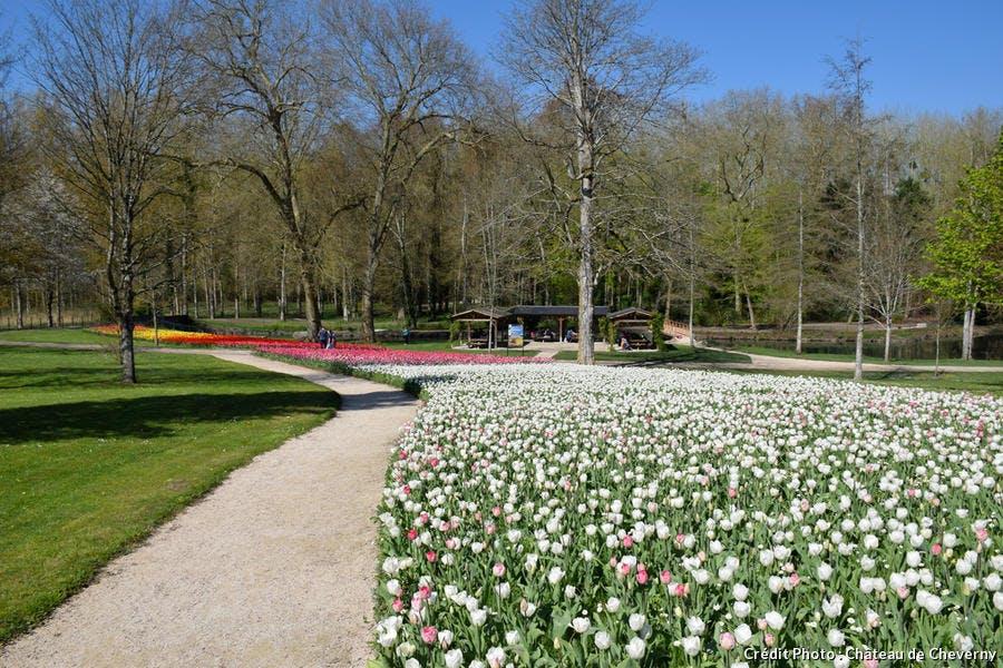 Ruban de tulipes géant au Château e Cheverny