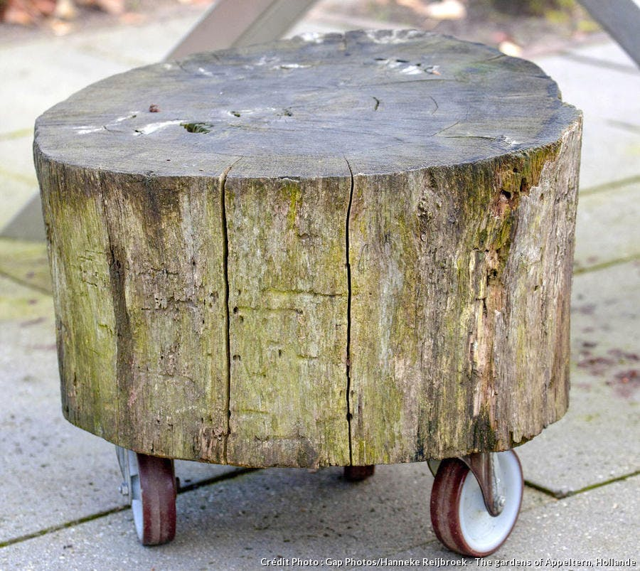 Siège créé dans un vieux tronc d'arbre