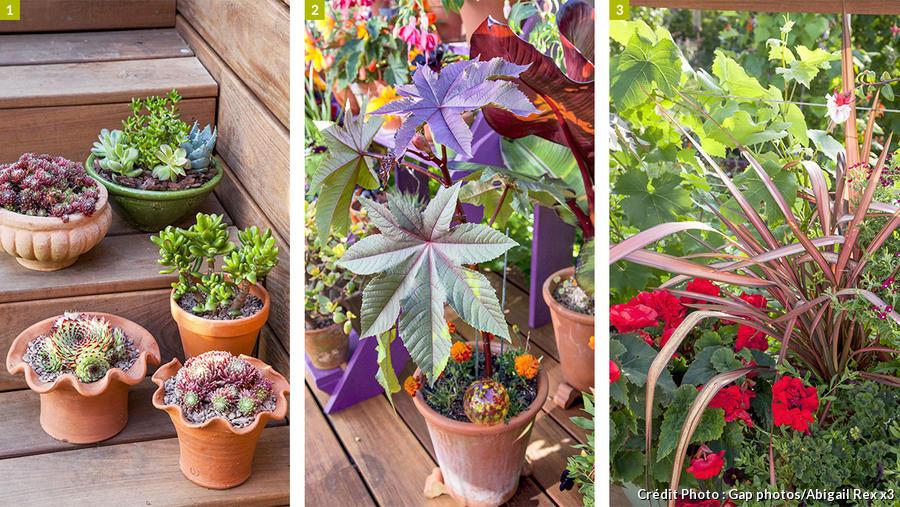 Plantes pour aménager une terrasse fleurie