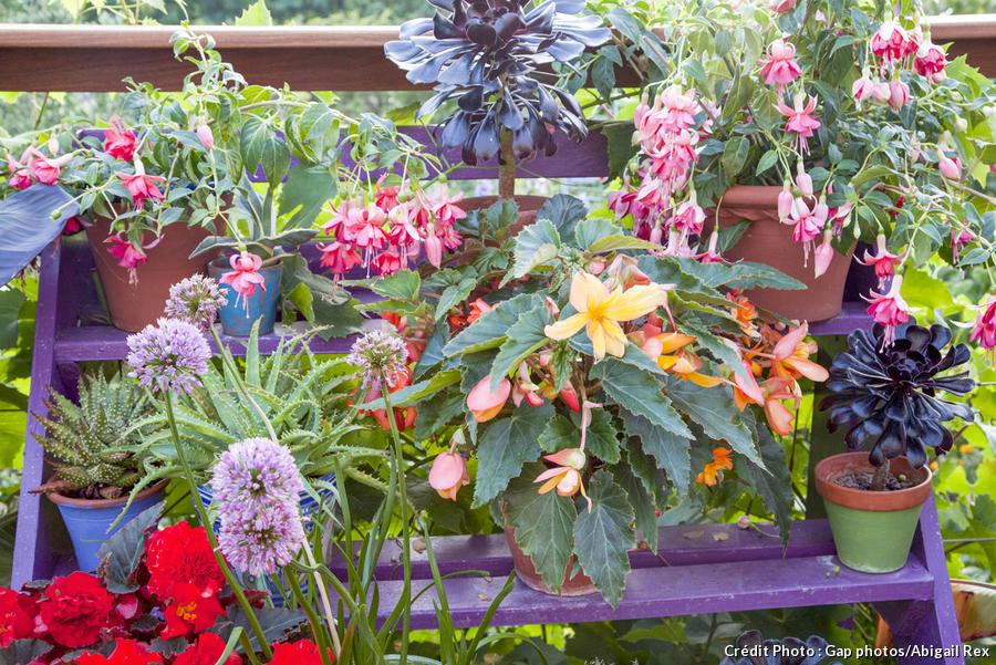 Pots pour fleurir une terrasse d'extérieur