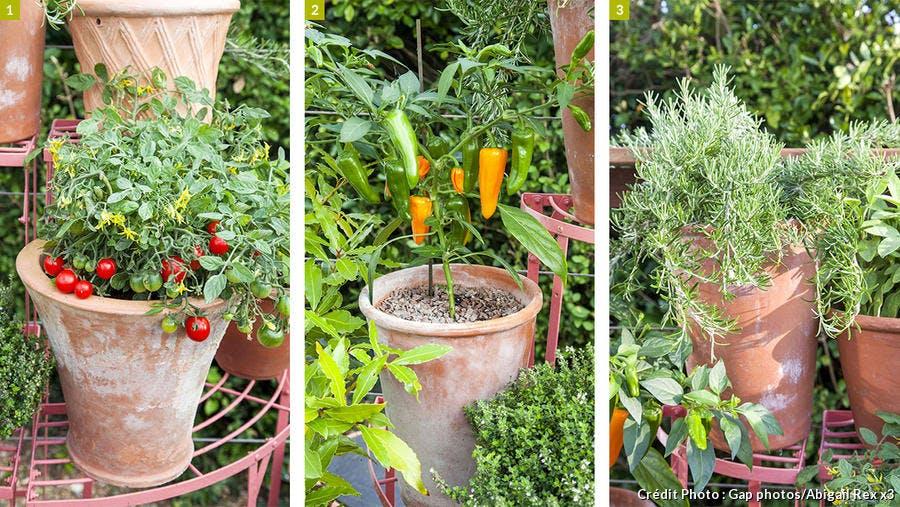 Potager en pot sur terrasse végétalisée