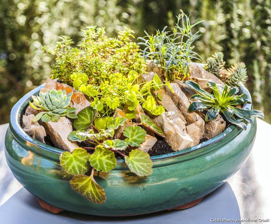 Creer une mini rocaille en pot