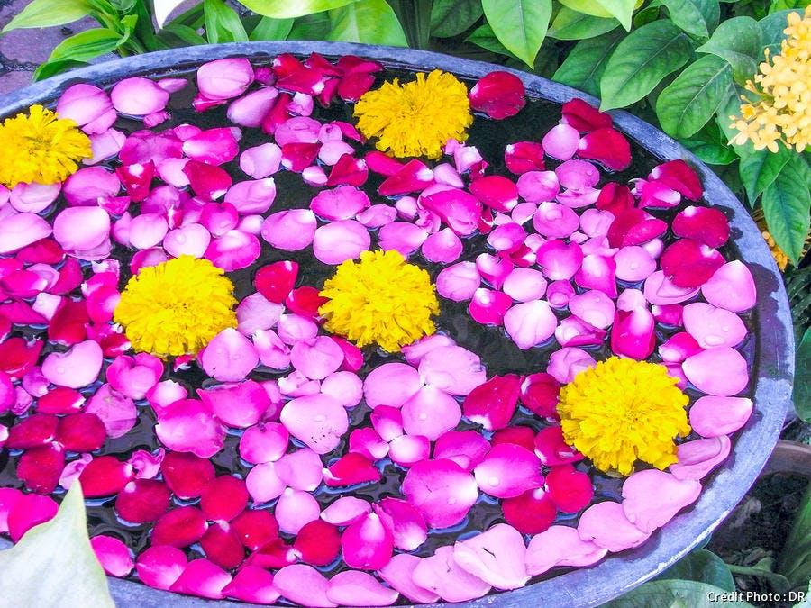 vasques fleuries aux couleurs pops