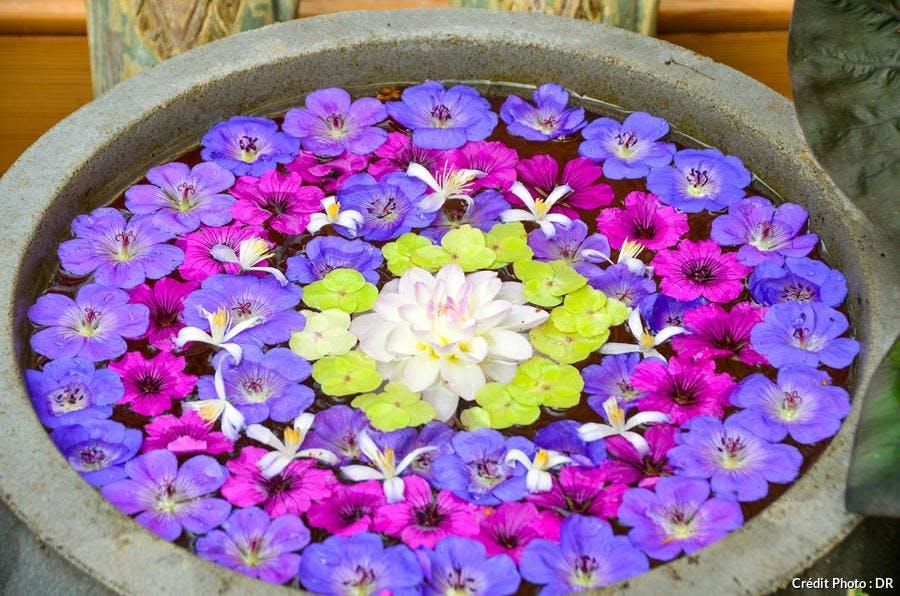 Vasque fleurie en rosace