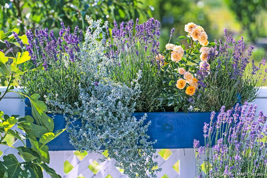 Fleurs D Ete Jardinieres Fleuries Les Plus Originales