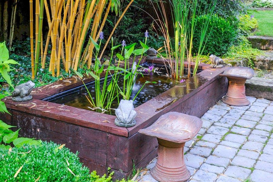 Plan d'eau avec des roseaux