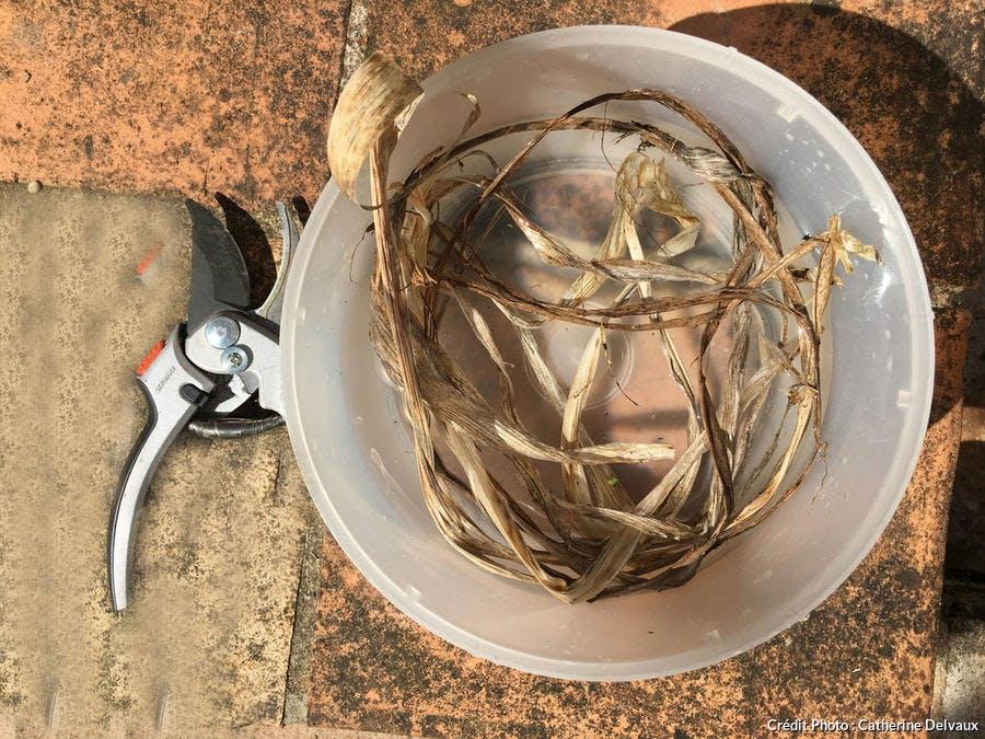 Herbes sèches pour allume-feu maison