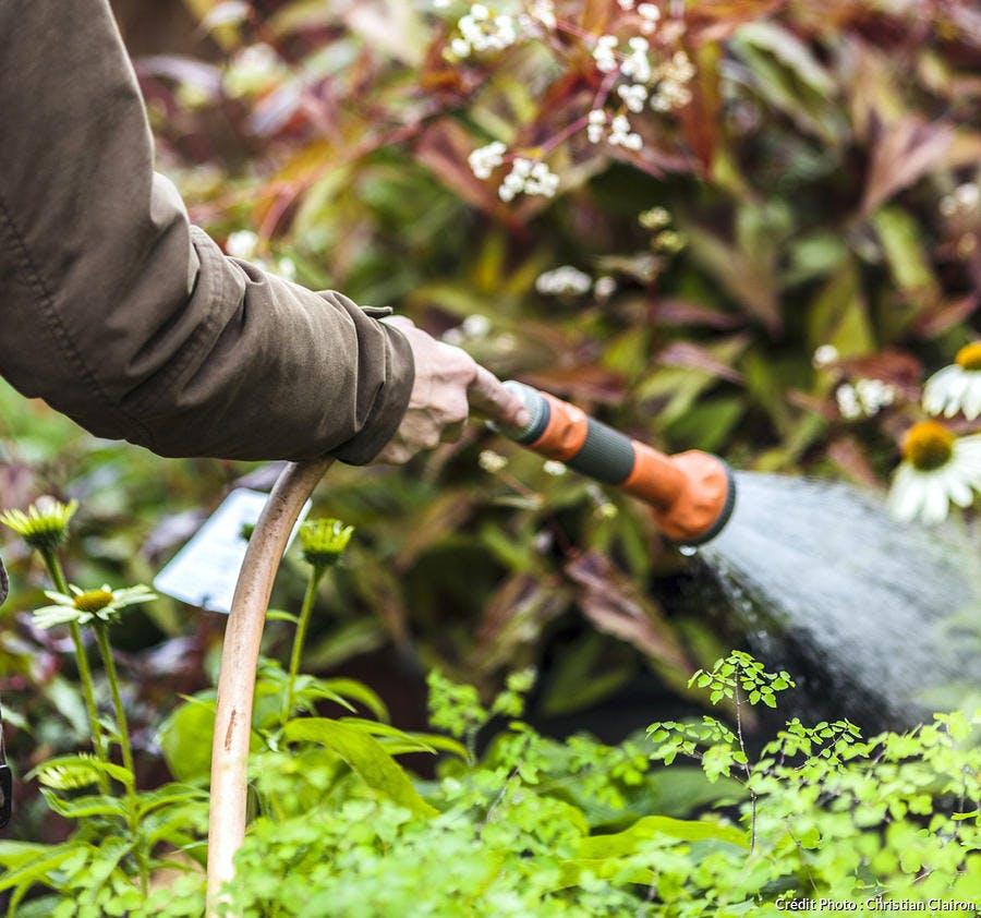 Arrosage des plantes