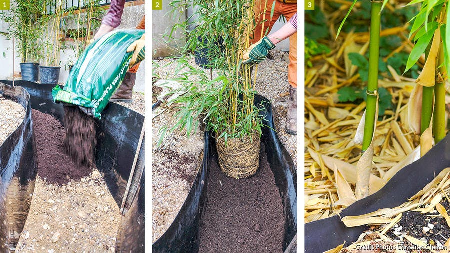 Poser une barriere anti rhizome autour des bambous | Détente Jardin