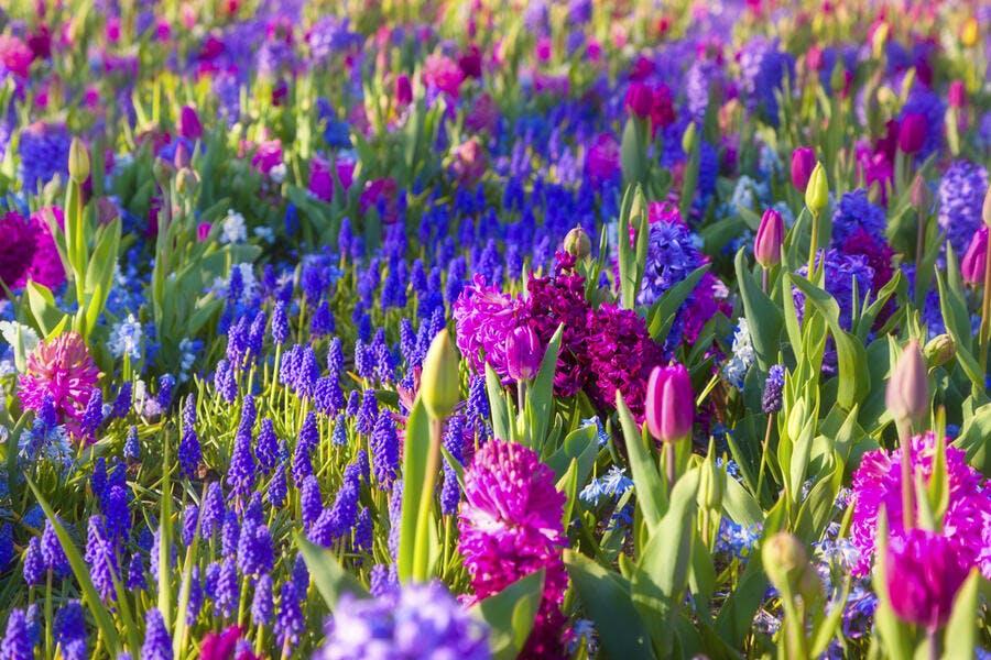 9 Bulbes A Floraison Printaniere Inratables Detente Jardin