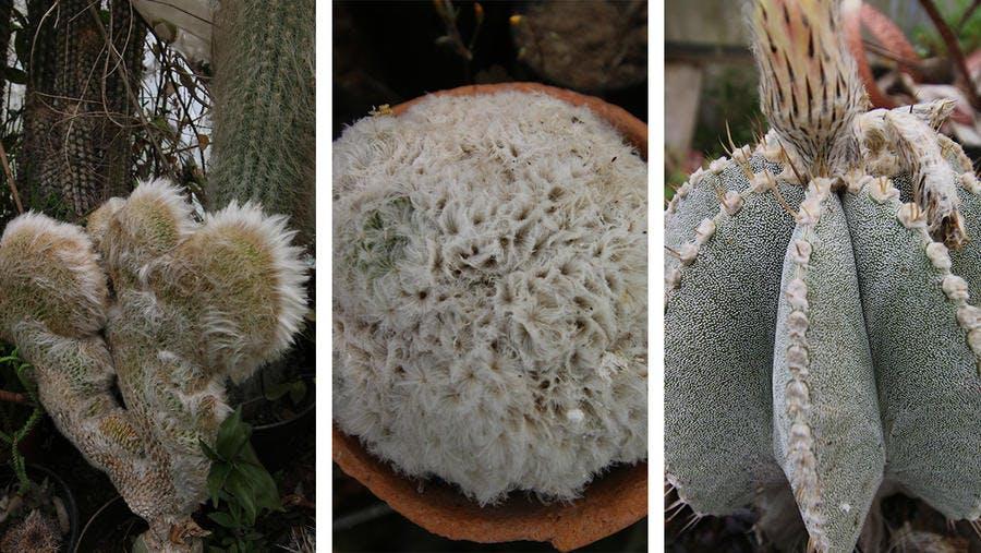 cactus bizarre