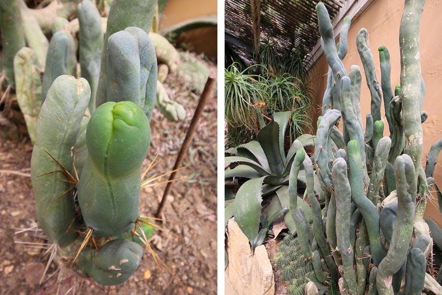 cactus zizi au parc tropical parc