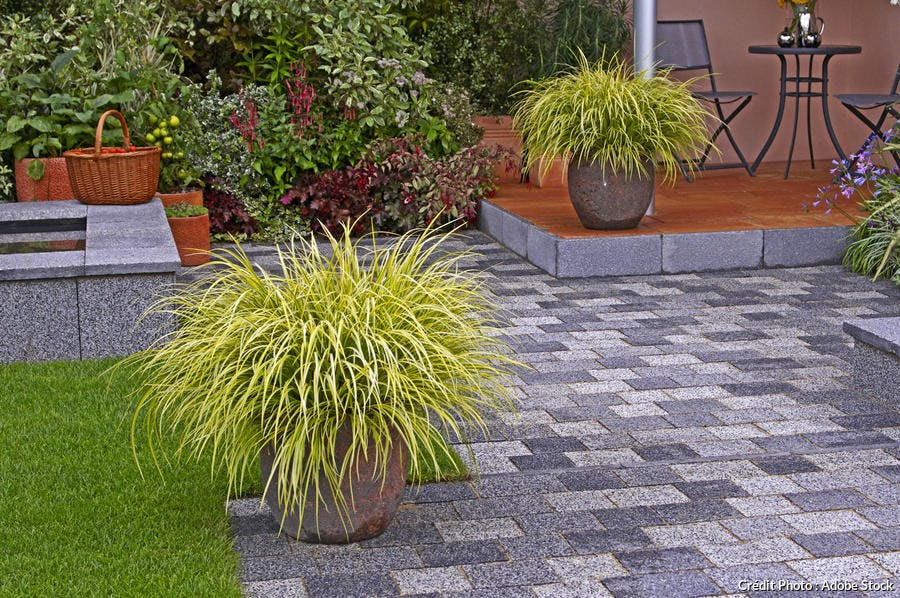 Carex en pot