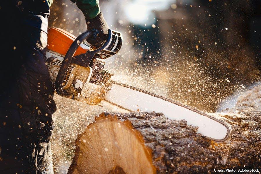 coupe bois à la tronçonneuse