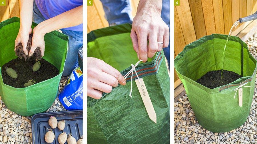 Cultiver les pommes de terre dans un sac