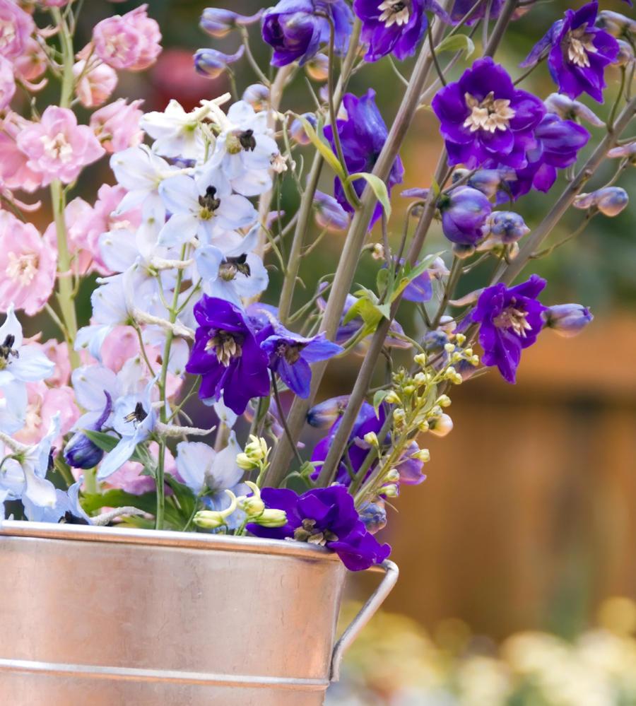 bouquet de delphiniums