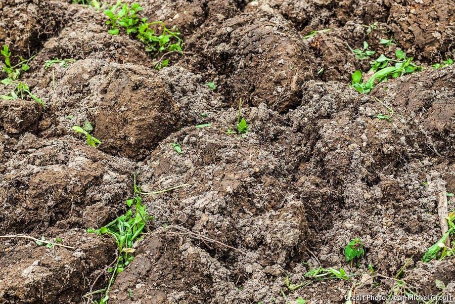 engrais verts enterrés dans le sol