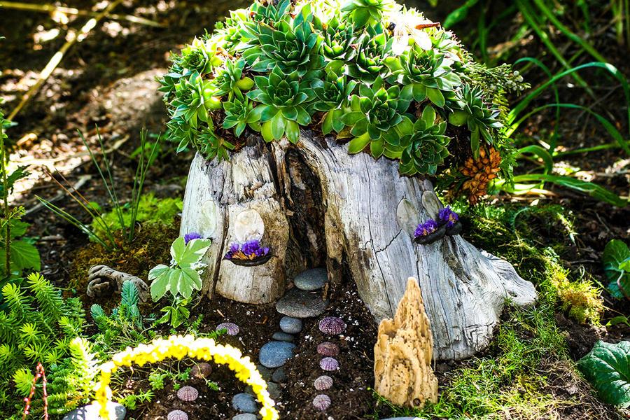 des succulentes dans un fairy garden