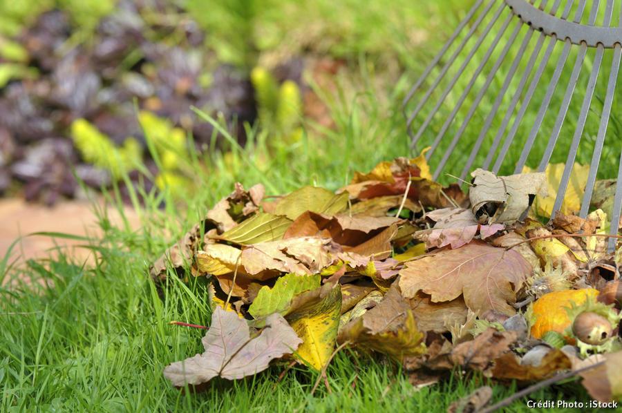 ramassage des feuilles mortes avec un râteau