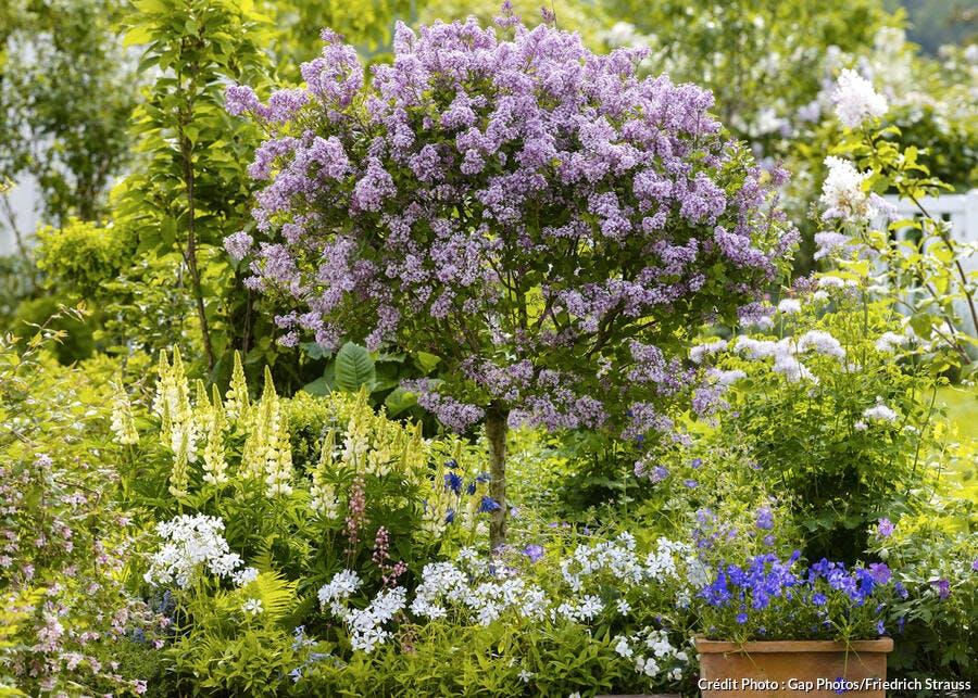 Quelles fleurs planter sous un lilas