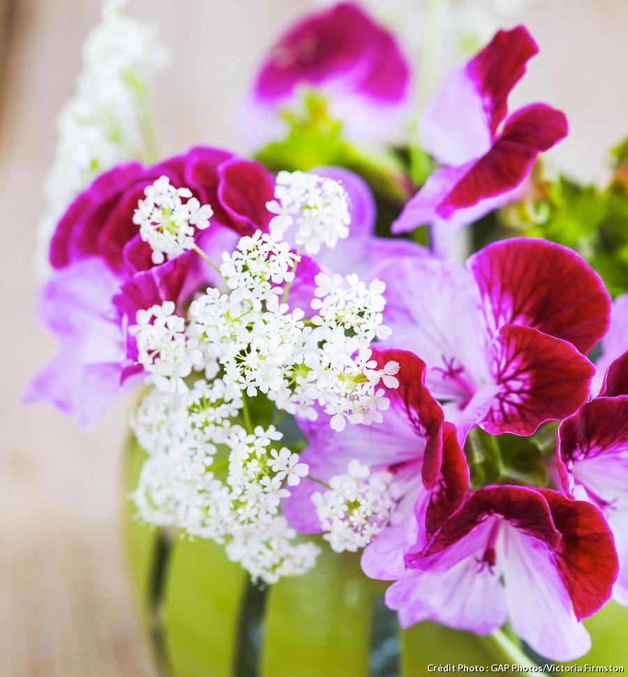 Bouquet de géraniums rouges