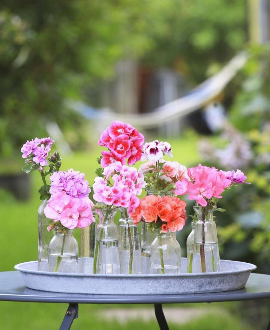 vases avec des fleurs de géraniums