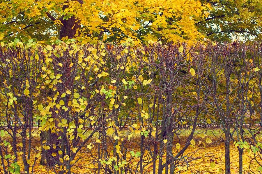 Haie arbustes automne