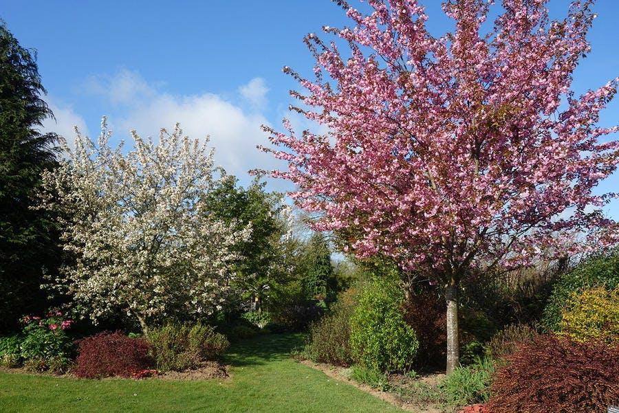 La jardin ouvert de Shirley Edwards en Mayenne