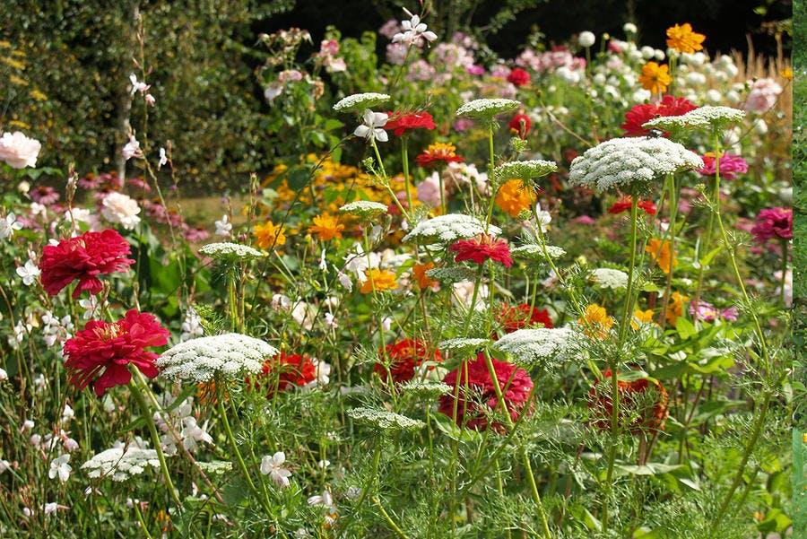Jardin de Mme Lefranc en Dordogne (Open Garden)