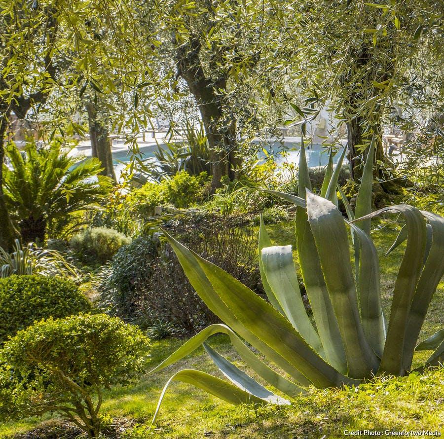 agave et cycas