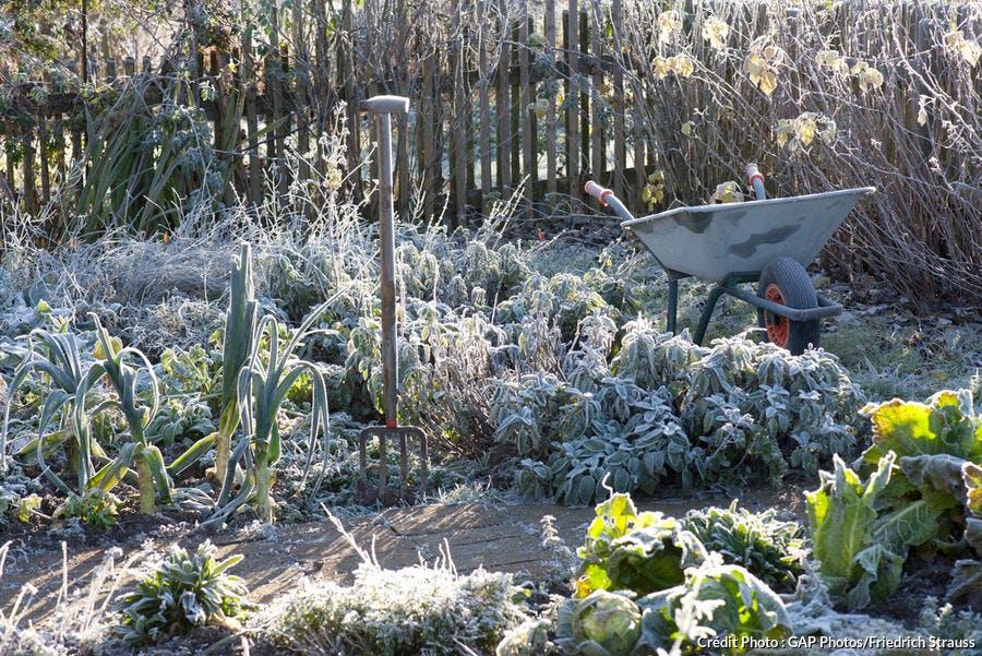 Jardin gelé