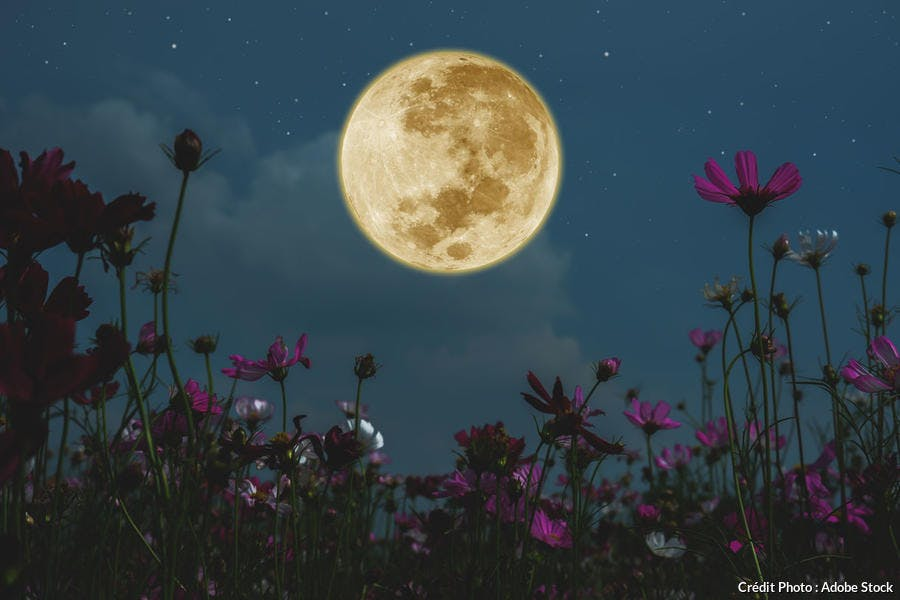 Cycle lunaire et jardinage