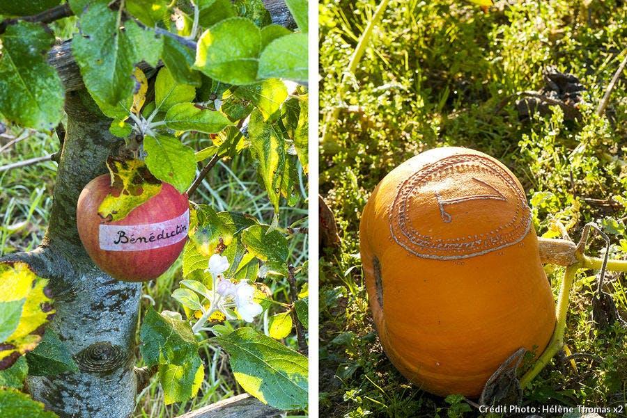 Pomme courge gravées