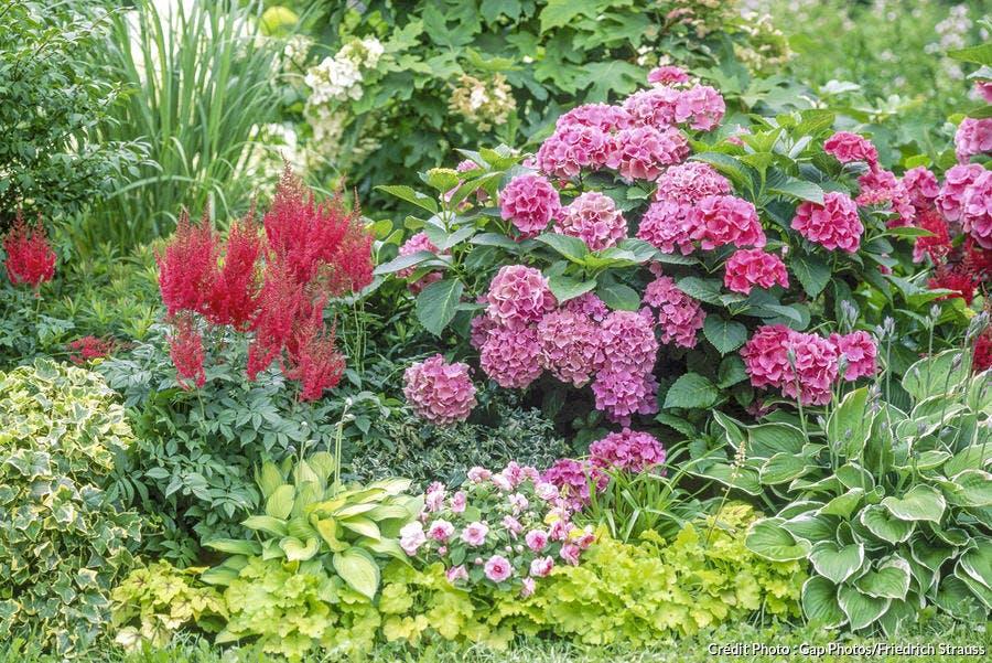 Massif de plantes colorées à l'ombre