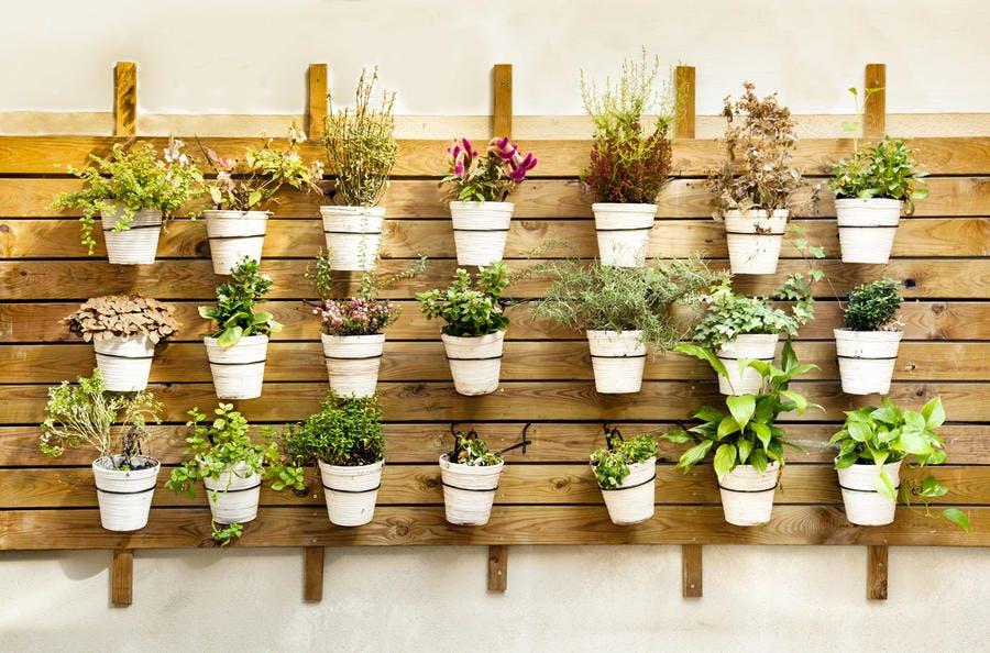 mur de palettes avec des pots de fleurs