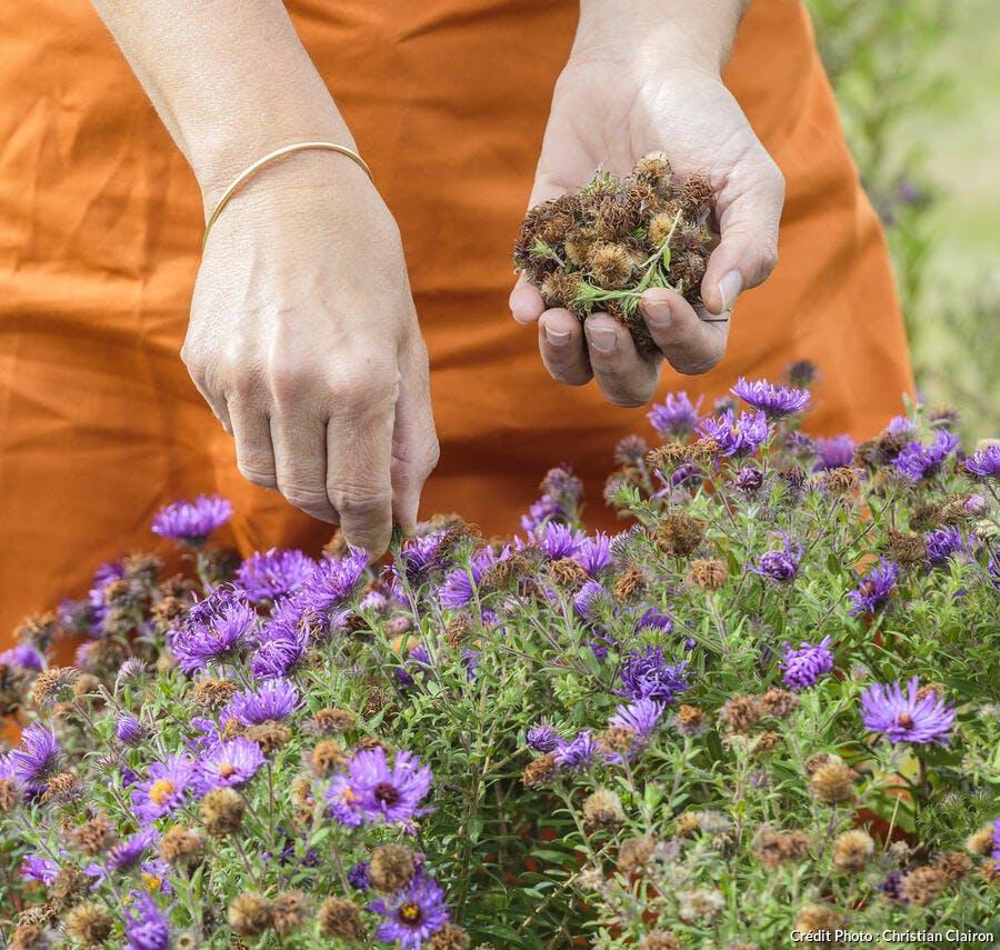 Nettoyage des fleurs