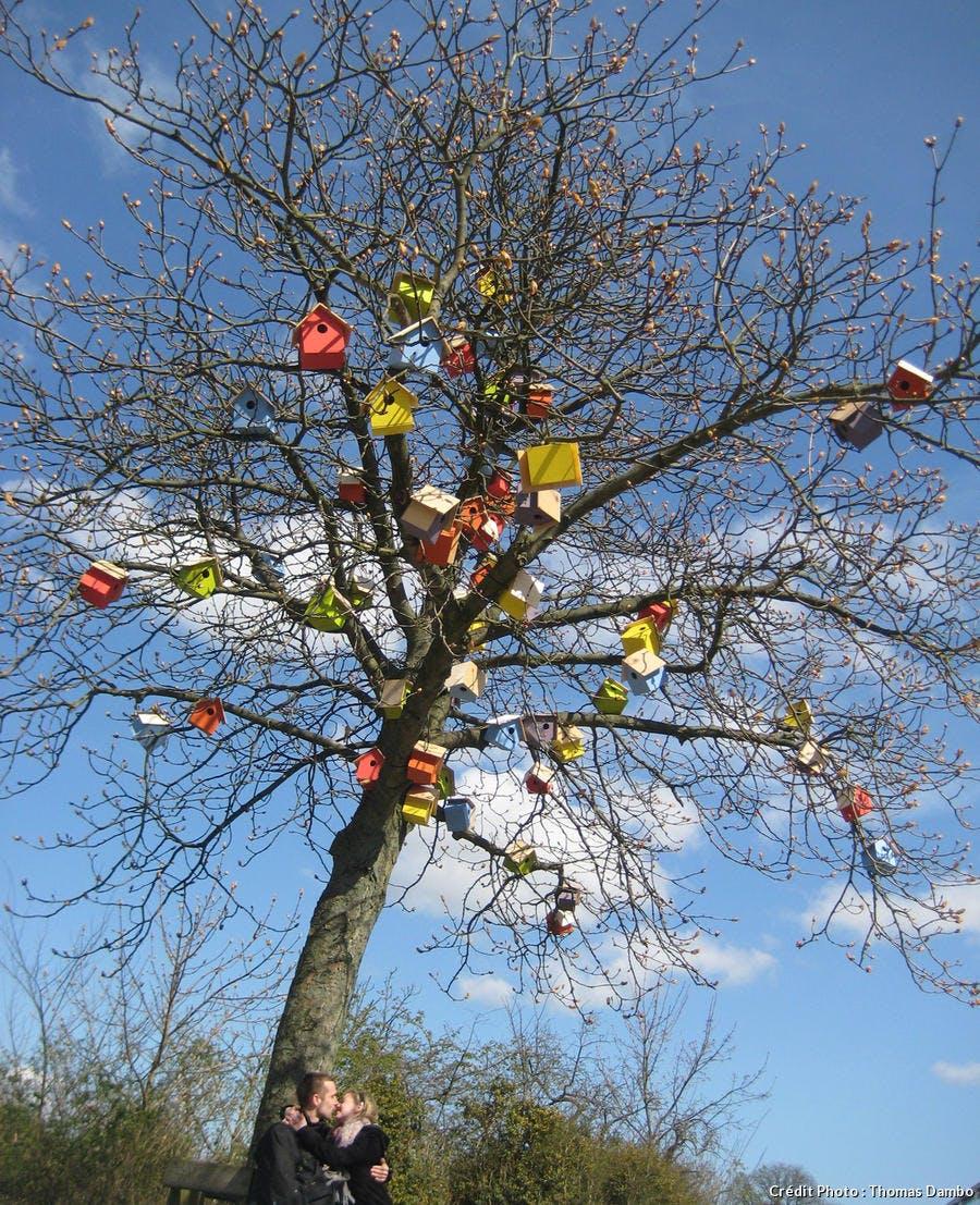 des cabanes à oiseaux dans un arbre