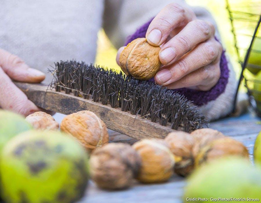 Brossage des noix