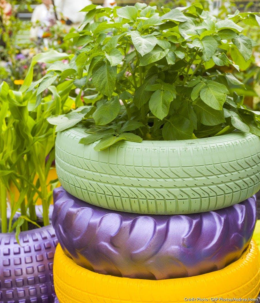 Mini potager dans un pneu