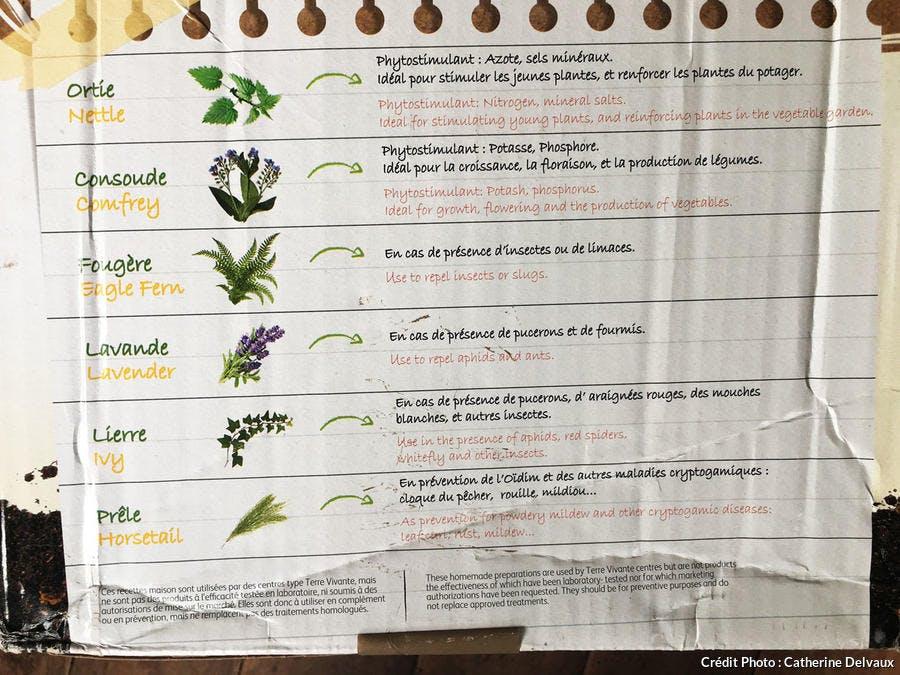 Plantes pour préparer des purins