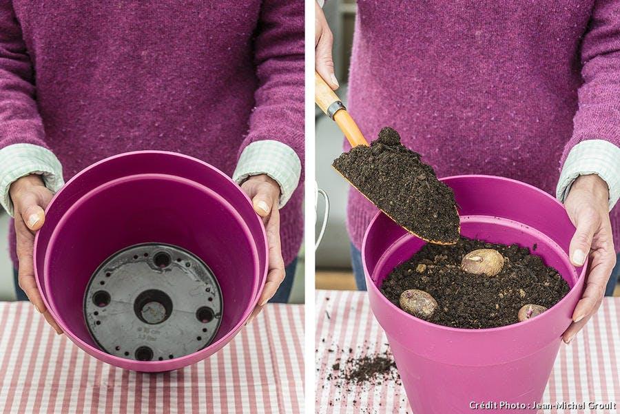 Plantation de pomme de terre en pot