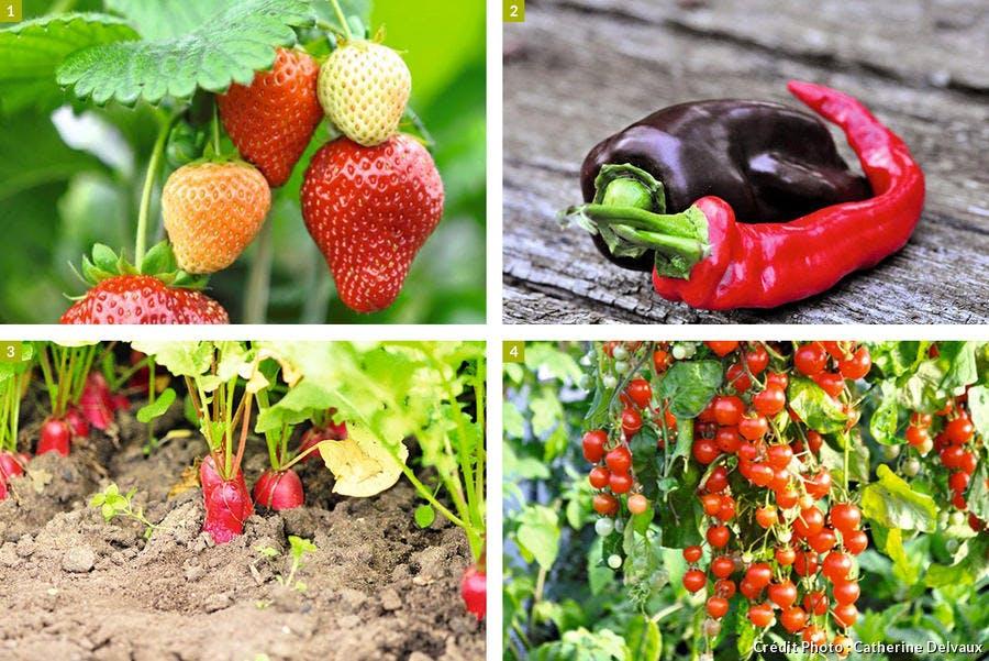 légumes et petits fruits sur le balcon