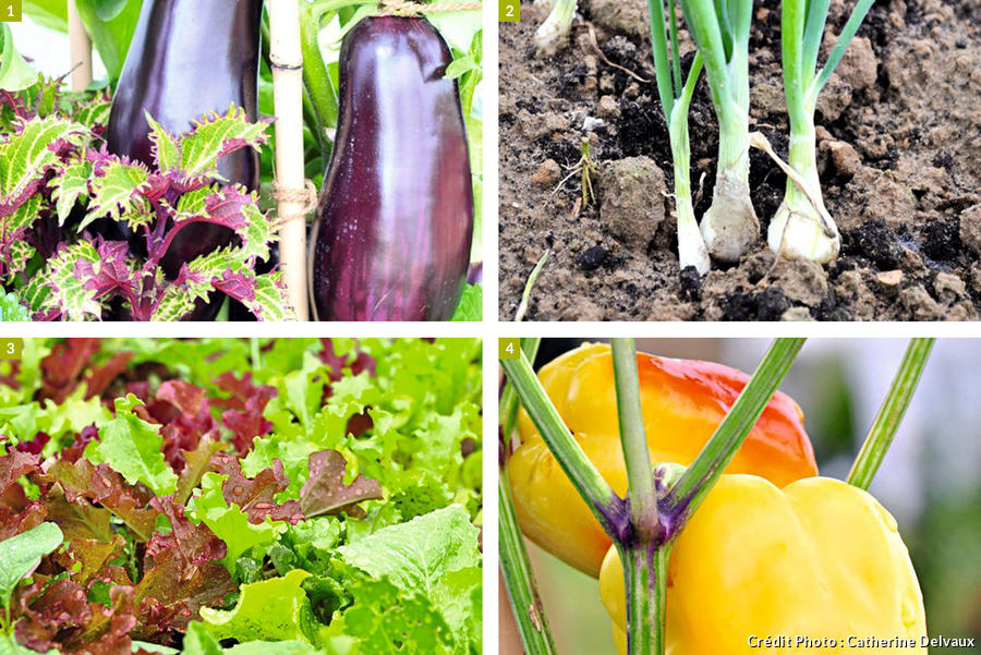 légumes pour un potager sur le balcon