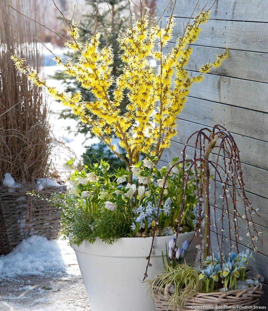 Composition florale d'hiver avec des crocus