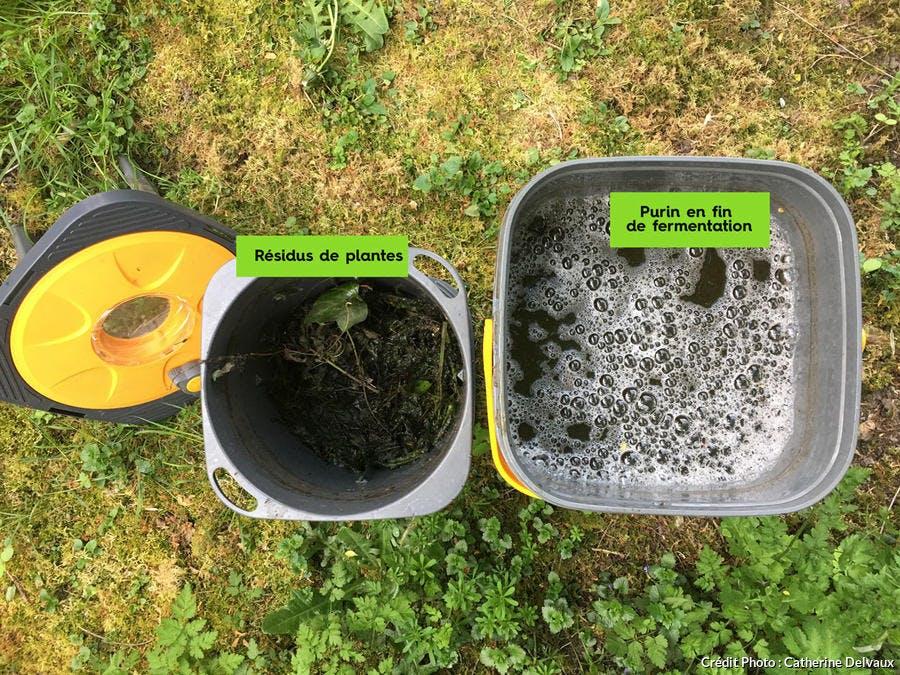 Fermentation des orties pour préparation du purin