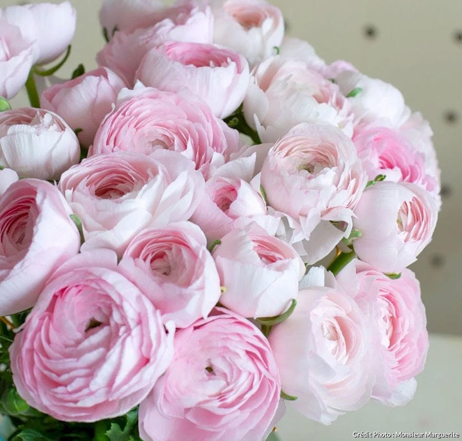 Bouquet de reconcules