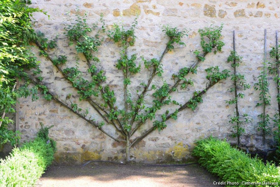les murs des chartreuses