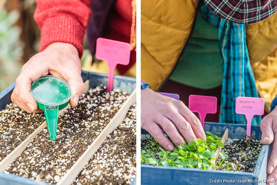 semer et planter les salades avec la lune d tente jardin. Black Bedroom Furniture Sets. Home Design Ideas
