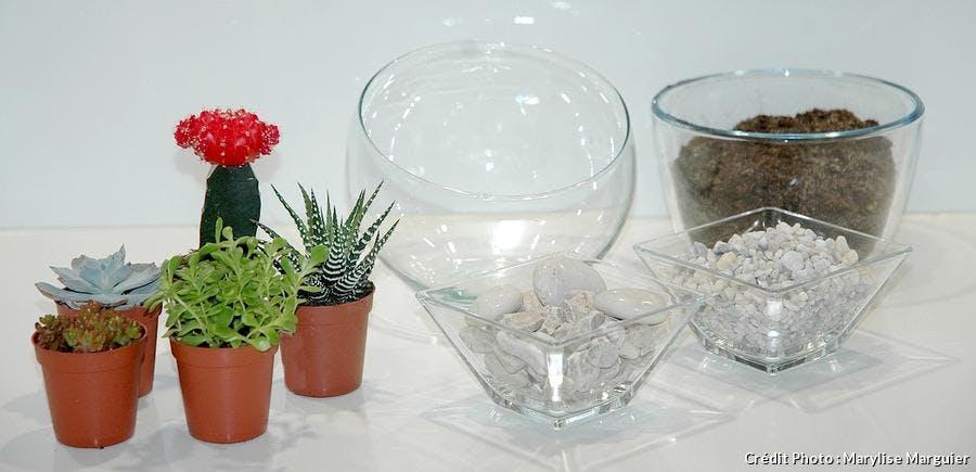 Terrarium succulentes